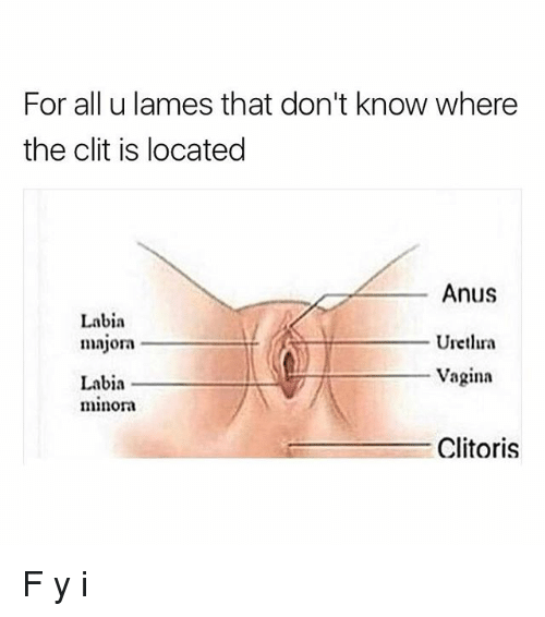 Coma reccomend Where is the clitoris located