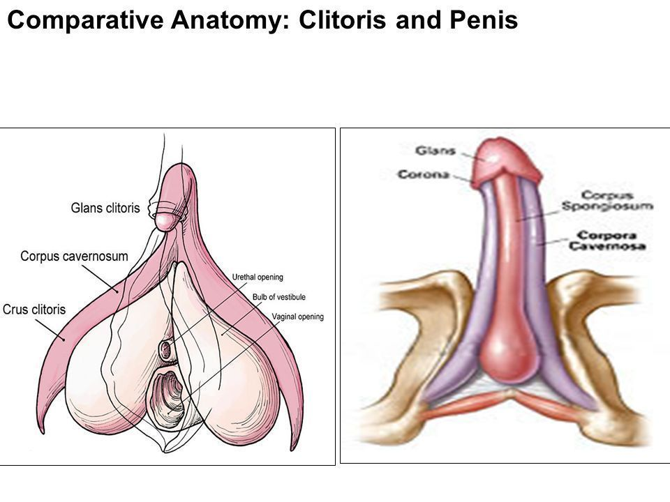 picture Clitoris with penis