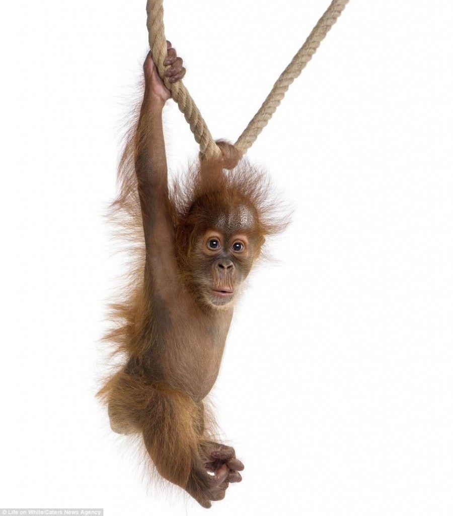Dorothy reccomend Shag swinging monkeys napkin