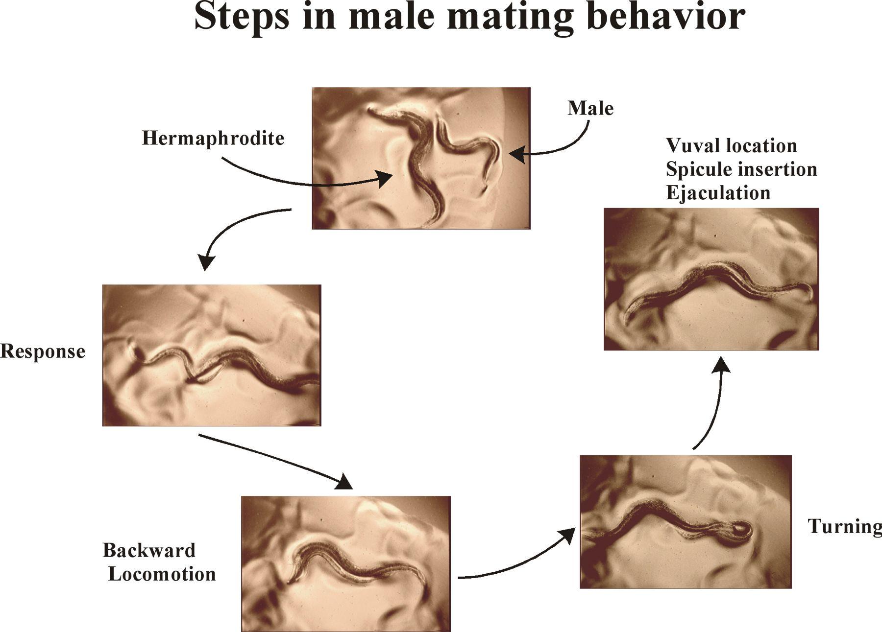 Male orgasm tyrps