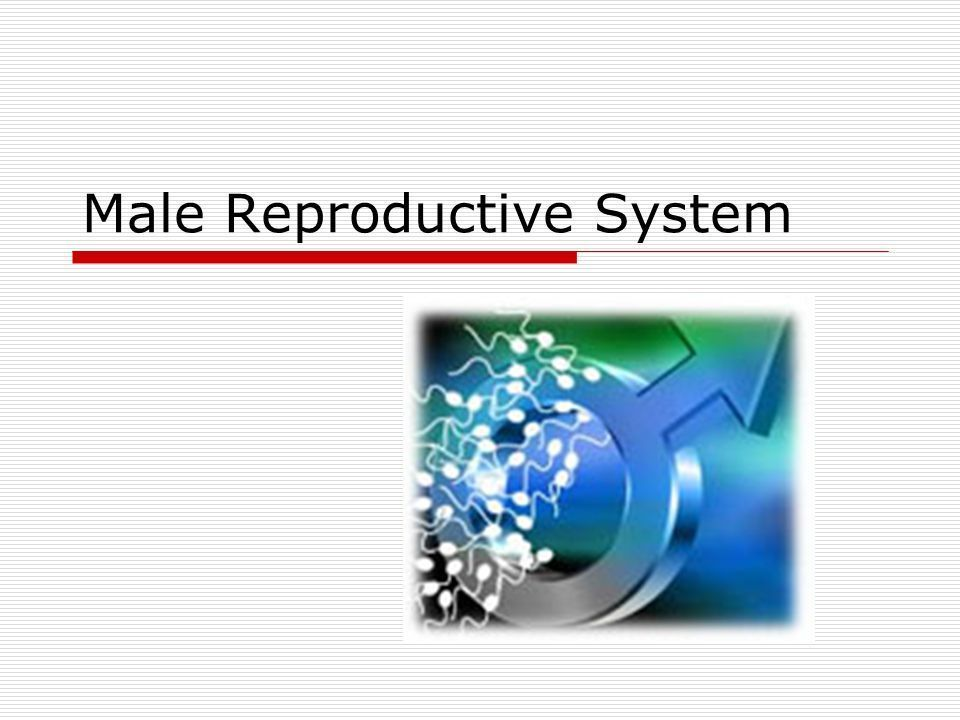 Name of men who cannot produce sperm cells
