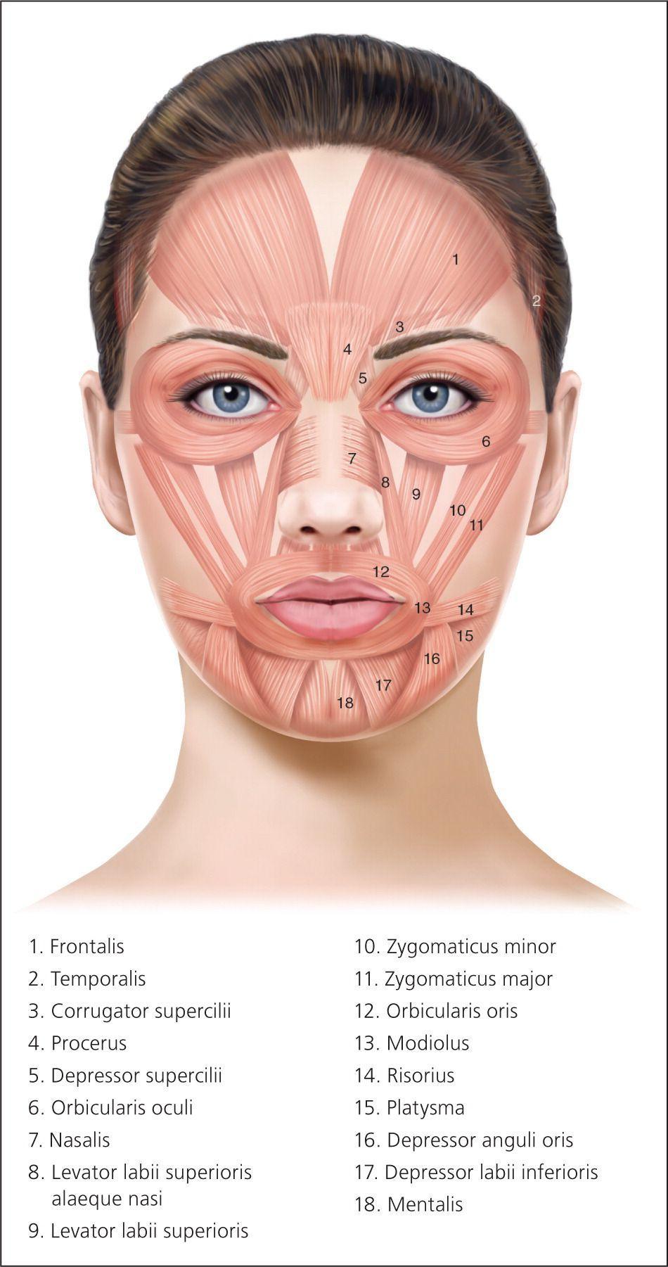 best of Saseydo Facial brush