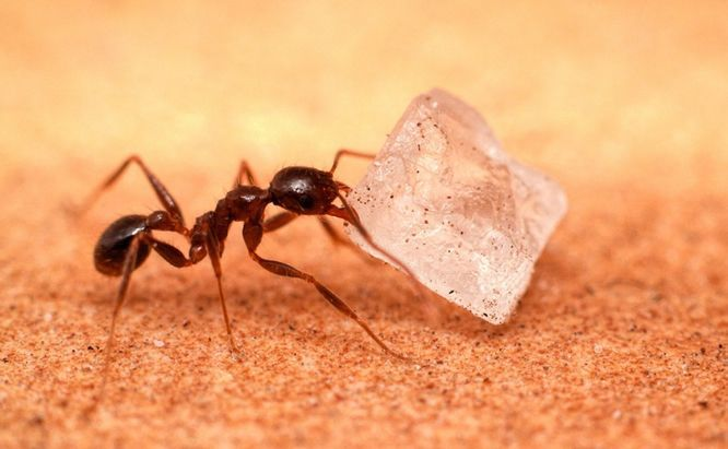 Ants rid of piss good message