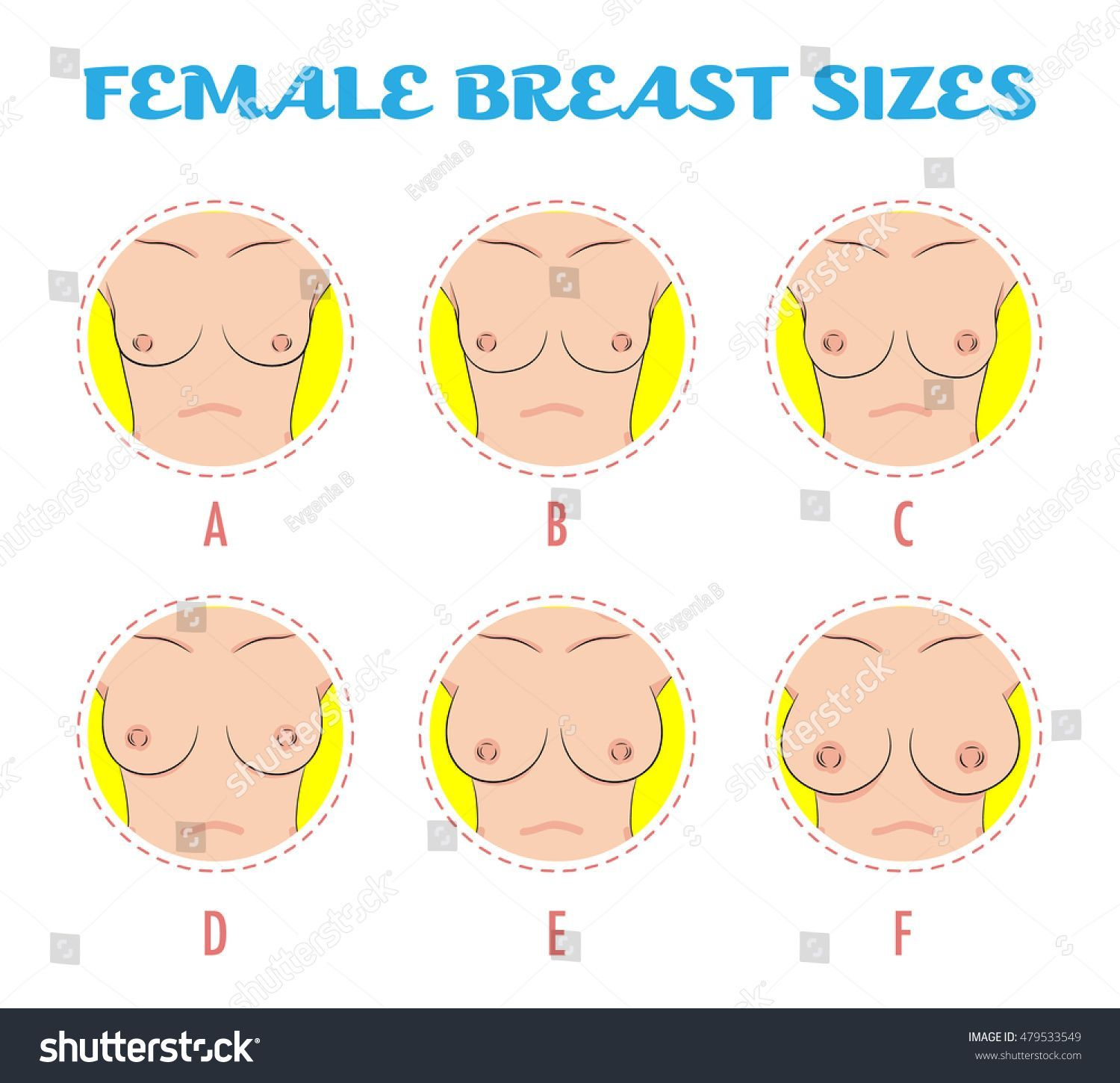 Boob sizes with pictures