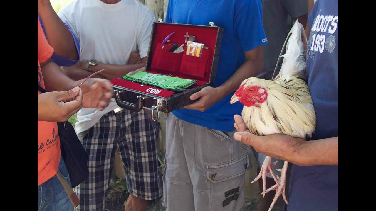 Filippino fighting cock gaffs