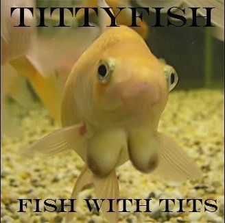 Iron reccomend Fish with tits