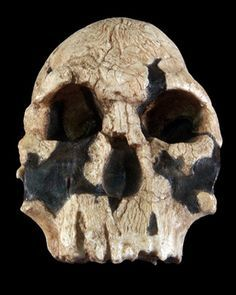 Cosmic reccomend Facial appearences of ngandong skulls