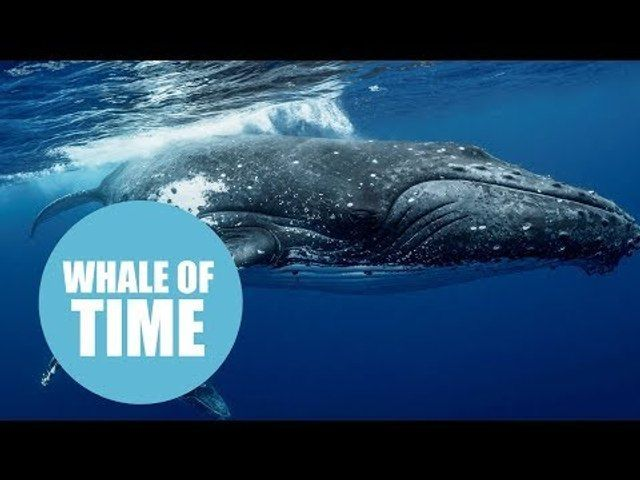 Watson reccomend Sperm whales and spearmint rhinos