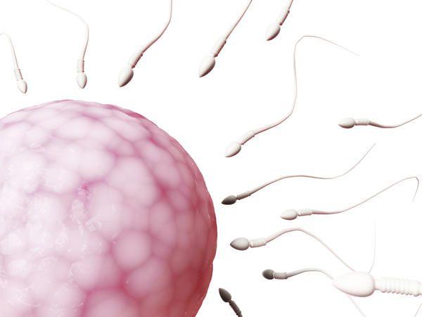 Semen or sperm penetrate clothes