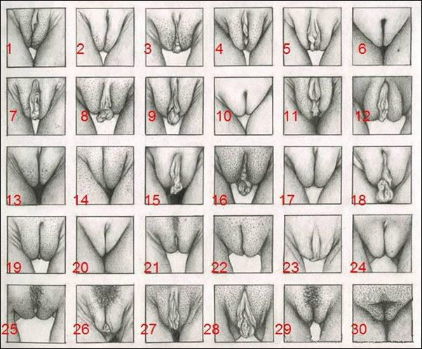 Different kinds of pussy pictures
