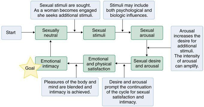 Signs of female sexual arousal